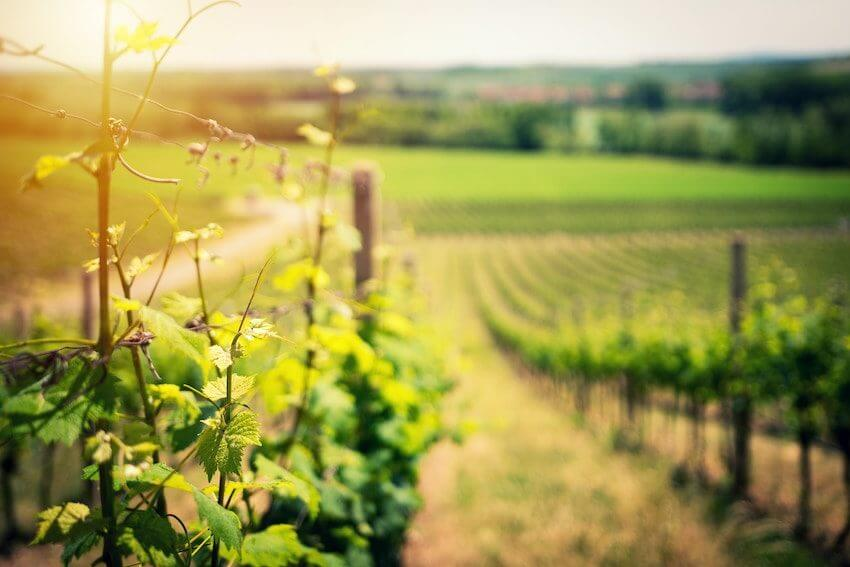 wineries on whidbey island vineyards
