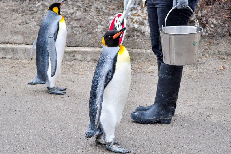 winter vacation calgary zoo penguins