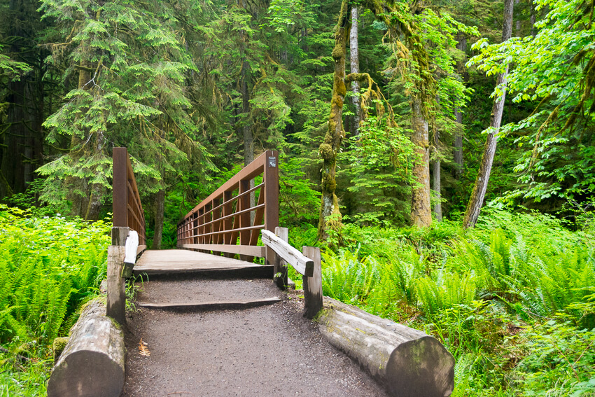 rain forest things to do in olympic national park