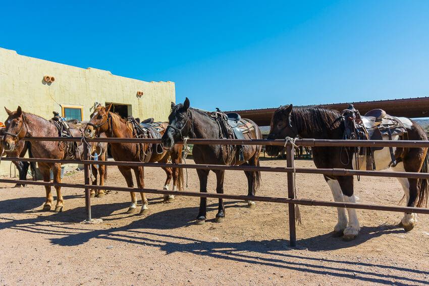 visit arizona horses