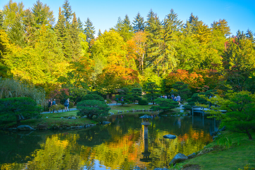 seattle in the fall japanese gardens