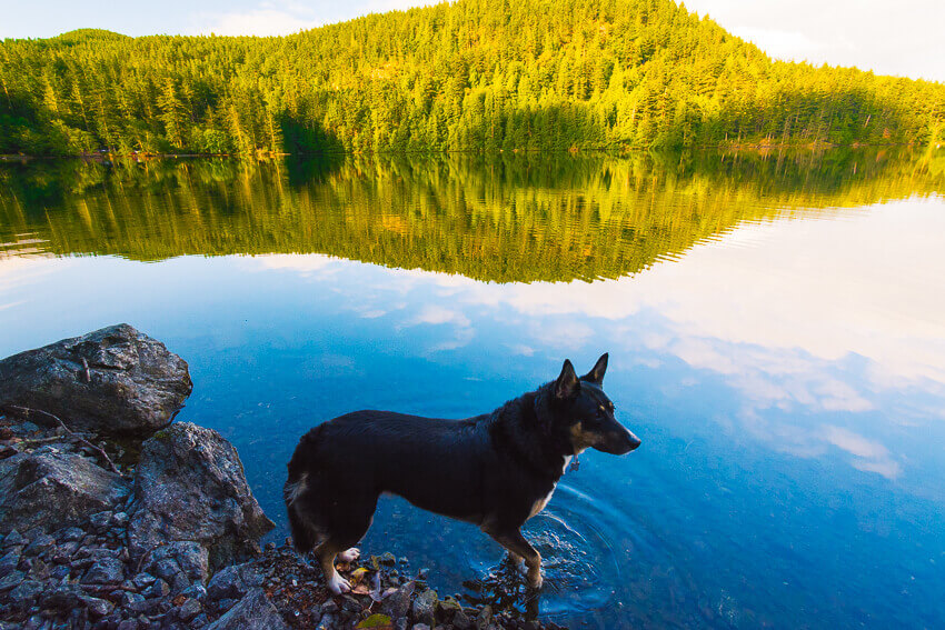 dog friendly vacations orcas island