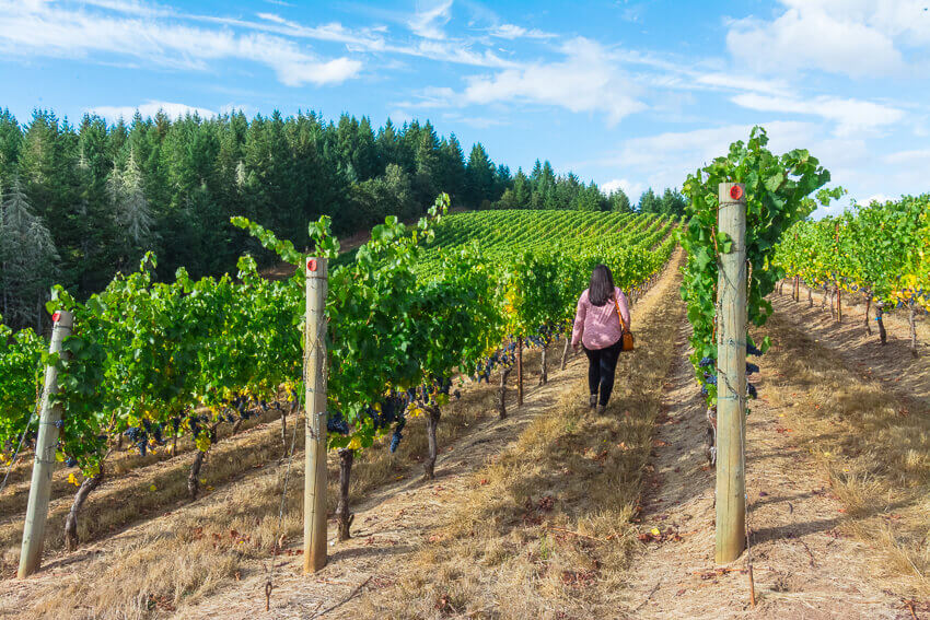 things to do in willamette valley iris vineyards
