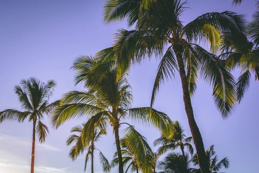 hawaii packing list trees