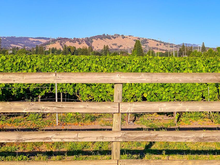 3 days in Sonoma vineyards