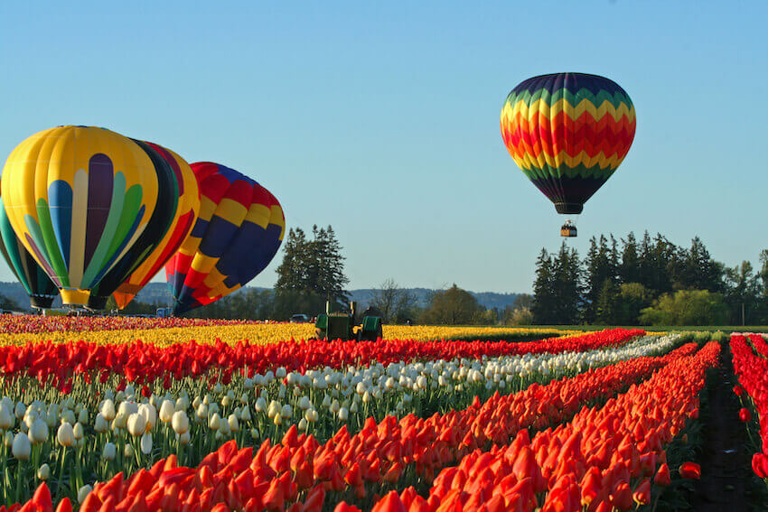 willamette valley in 2020 tulips