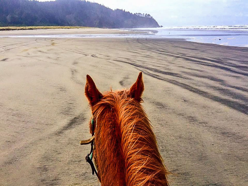 horseback riding long beach