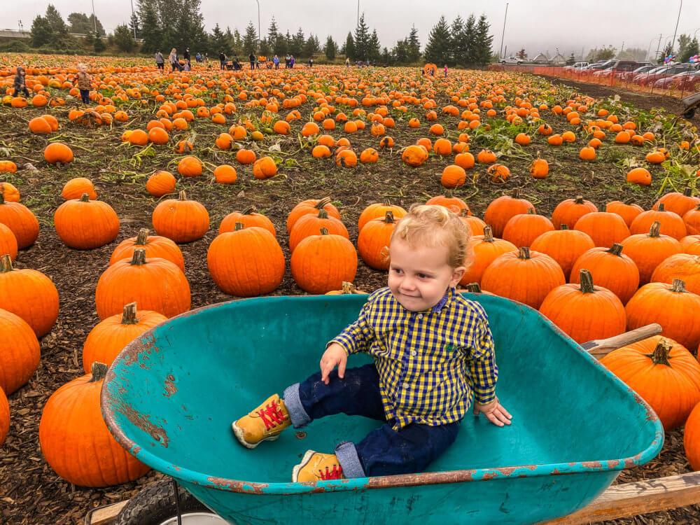 seattle fall activities pumpkin patch