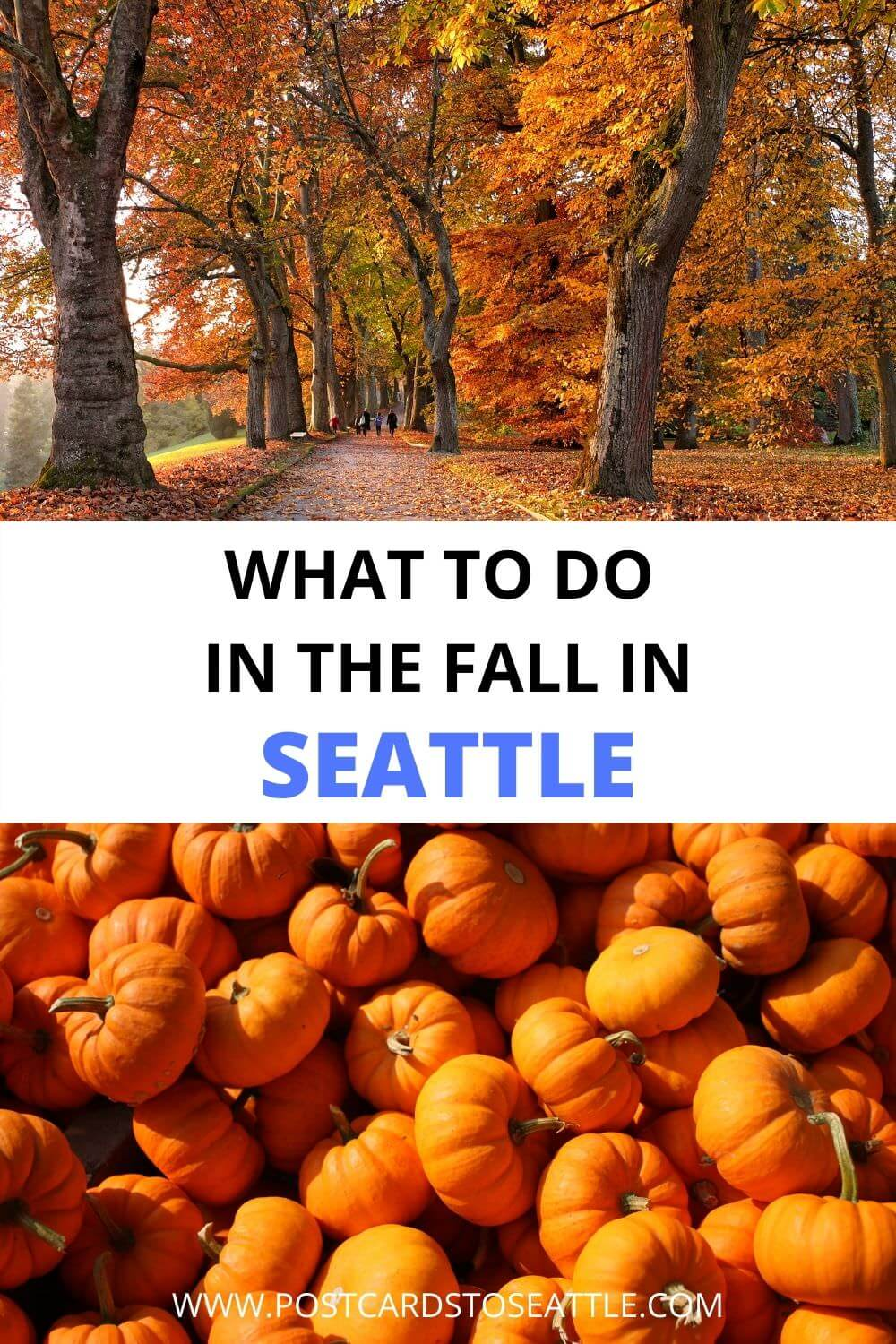 The Best Things to Do in Seattle in the Fall