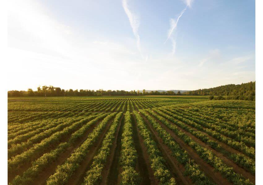 Willamette Valley Wine Farm