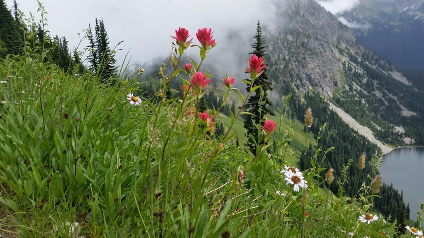Wildflowers Blooming In Mountains