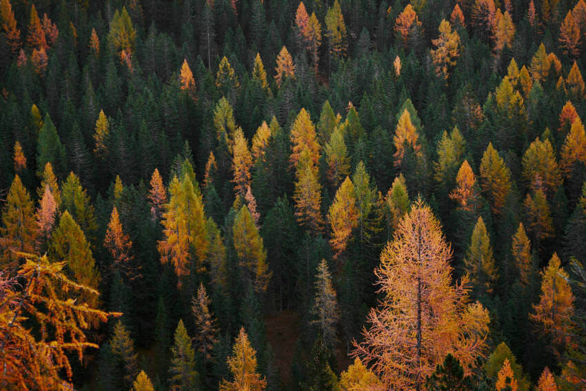 Forest Of Autumn Trees