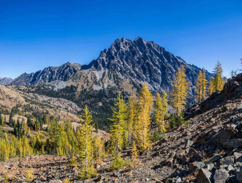 Mountain Peaks Trees