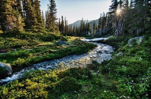 National Parks In Washington Olympic